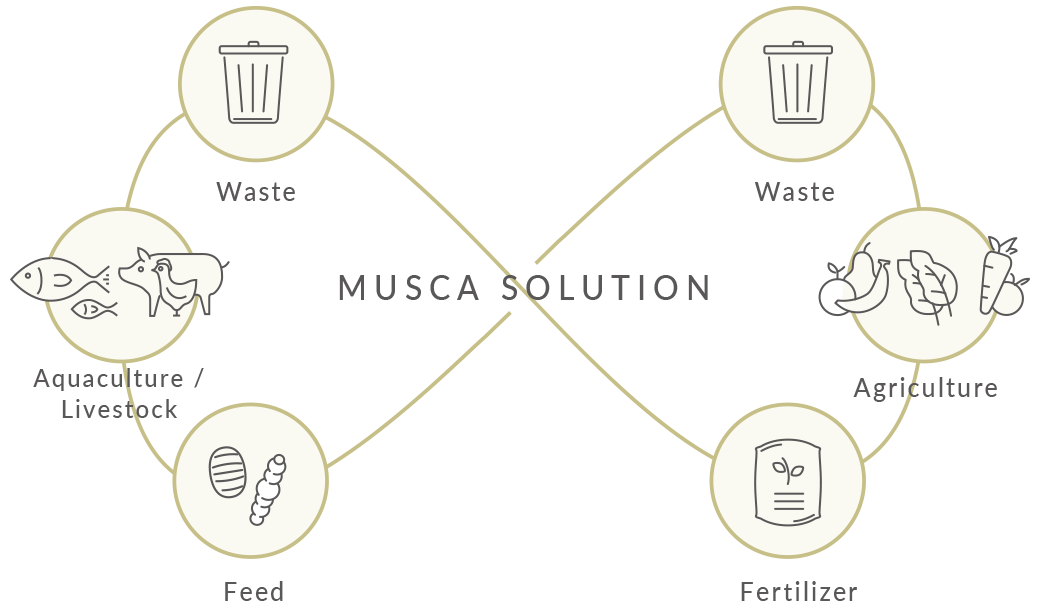 MUSCA SOLUTION